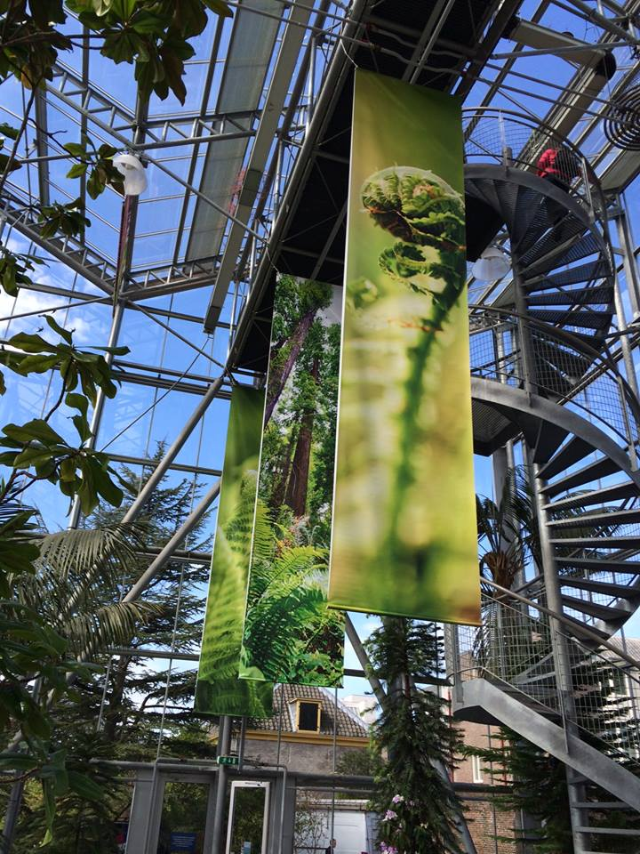 Planten uit de Oertijd banieren Studio Kaboem!